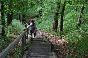 Die vielen Stufen der Himmelsleiter bis zur Burgruine